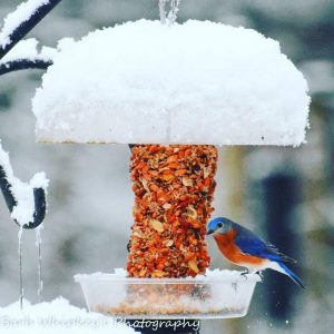 Winter Birds- What the birds want you to know