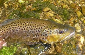 Spring Trout Stocking Begins in Maryland Lakes and Streams