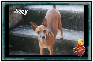 Wednesday's Pet is JOEY