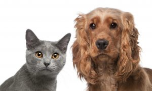 Upcoming Clinics Offer Free Rabies Vaccinations for Pets