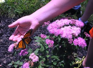 Calvert Hospice Butterfly Release to be Held on June 11
