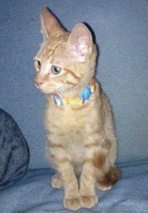 Pet Cat Shot in La Plata – Crime Solvers Offering Cash Reward