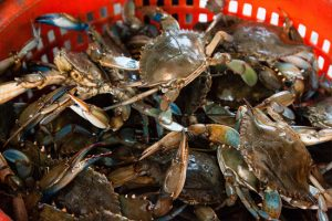 Blue Crab Stock Considered Sustainable, Despite Population Decline