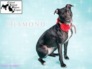 Wednesday's Pet is DIAMOND