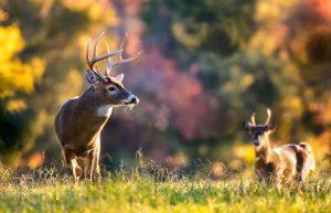 Junior Deer Hunting Days Set for November