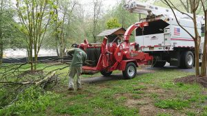 Homeowners Should Check Tree Contractors' Credentials