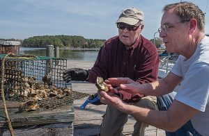St. Mary's Co. Community Rallying Behind Plans for Oyster Restoration