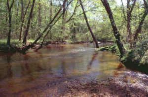 Almost 6 million Gallons of Wastewater Overflowed into Mattawoman Creek Watershed