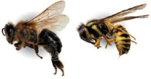 Calvert Advises to be Cautious at Convenience Centers Over Wasps and Bees