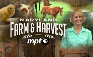 Charles County Featured in Maryland Public Television's Thanksgiving Episode