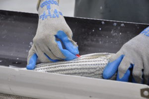 Maryland Department of Natural Resources biologists carefully tag adult striped bass during the annual spring spawning survey.