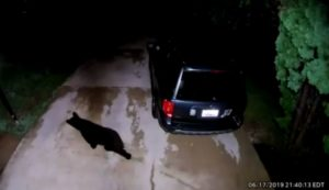 VIDEO: Bear Caught on Home Security Video Walking Around Waldorf Neighborhood