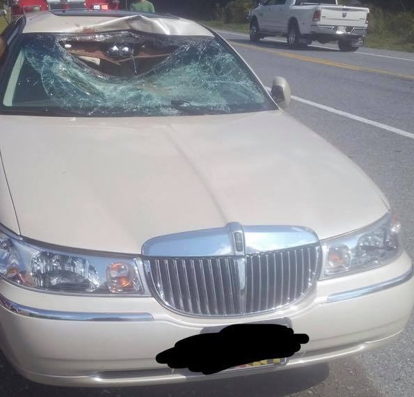 Minor Injuries Reported After Deer Goes Through Vehicles Windshield in Port Tobacco