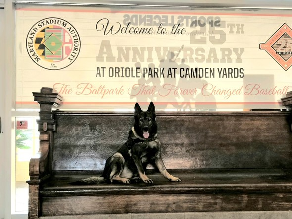 First State Fire Marshal K-9 Certified with Maryland State Police Retires at Nine Years-Old
