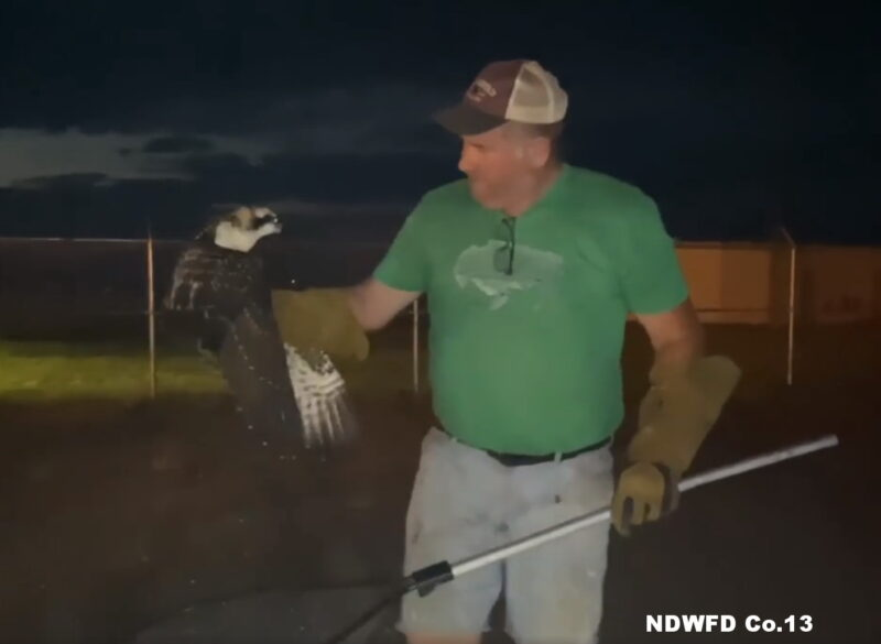 VIDEO: Gentle Hands Wildlife Rescues Osprey on Naval Air Station Patuxent River
