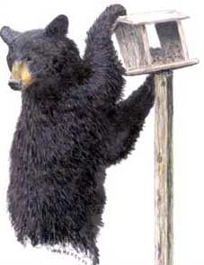 Maryland Bear Sightings Increase During Summer Months