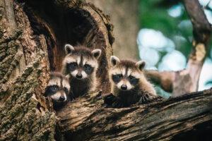 A Reminder to Marylanders: Keep Wildlife in the Wild