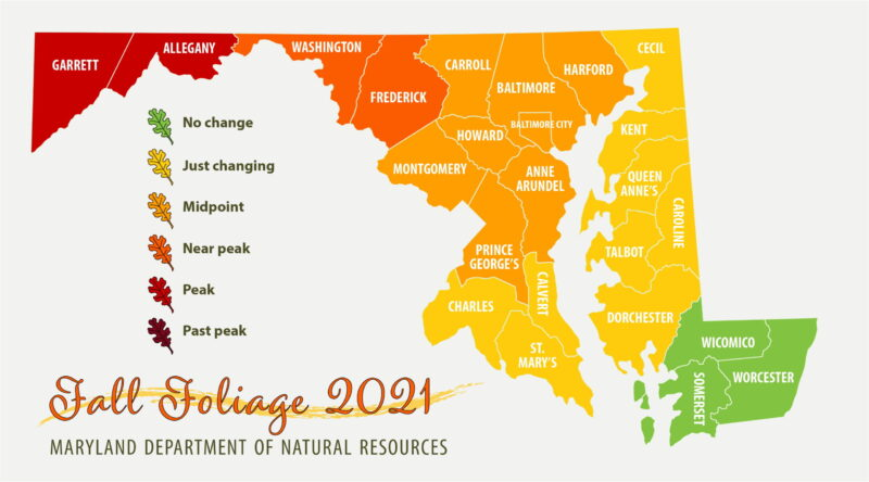 Maryland Department of Natural Resources – Fall Foliage Report for October 21, 2021