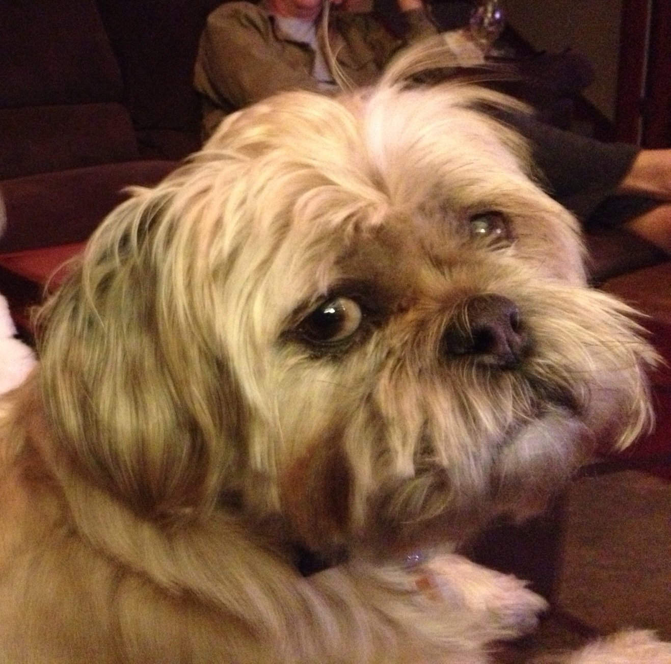 LOST – 4/26/13 – Dog, Shih Tzu / Pug Mix – St. Mary's County
